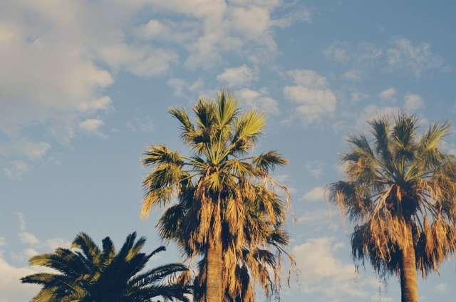 palmbomen Barcelona