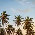 palm trees rens kroes