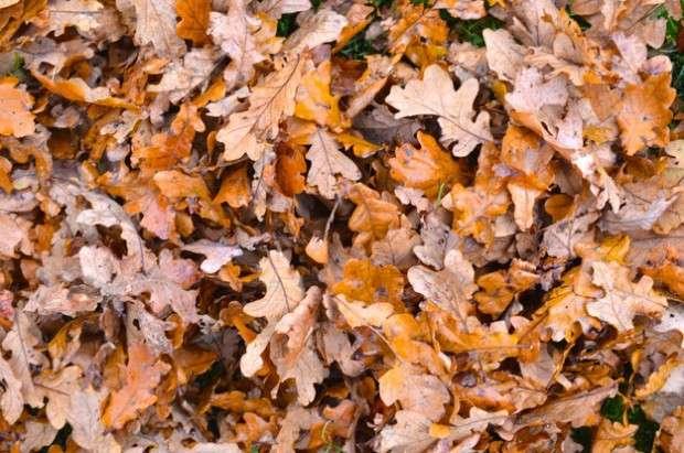 fall, leaves Rens Kroes